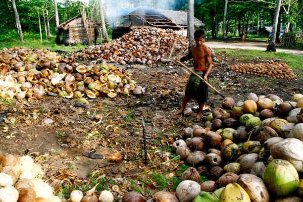 A farmer sorts coconut at his farm in Mati, Davao Oriental before carving out the meat for copra, which is a raw material in producing coconut oil. Mindanews File Photo by Keith Bacongco