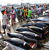 PH investors keep PNG tuna industry vibrant