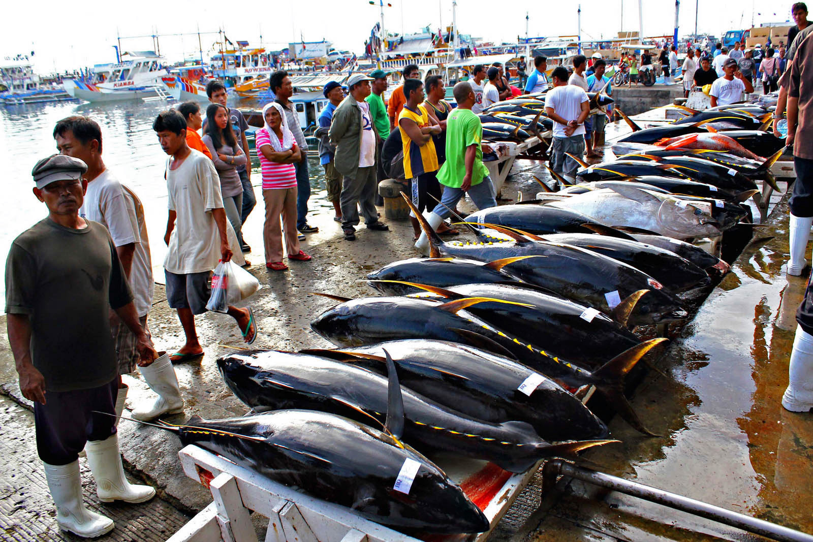 Tuna fish are lined up for weighing before they are sold to buyers at the Fish Port Complex in Barangay Tambler, General Santos City last Nov. 21, 2011. MindaNews photo by Erwin Mascarinas