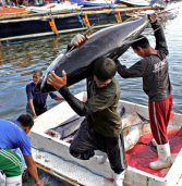 Raise labor standards in tuna industry