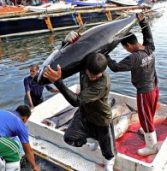 The Philippine tuna industry in crisis: Another look