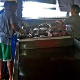 A second chance for fisherfolk in Panabo's Mariculture Park