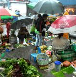 Vegetables in the Rain