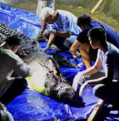 Necropsy on Lolong inconclusive, more tests needed
