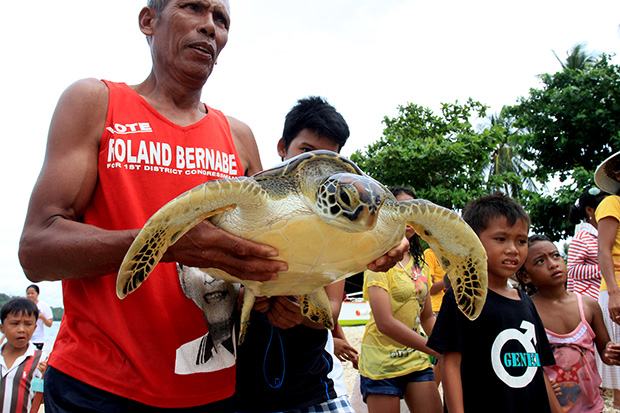 CATCH AND FREE. Pamocino Florino, 55, a local fisherman of an island village of Danawan in Surigao City caught a sea turtle and a baby shark while fishing on the waters. These endangered species were released back on the waters yesterday afternoon (April 21, 2013). Photo by Roel N. Catoto