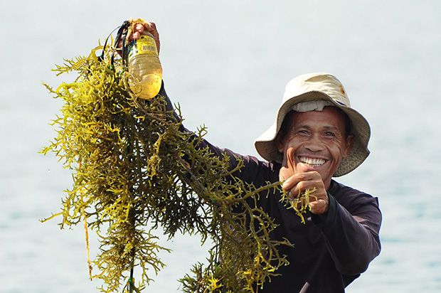 A fisherman shows his newly-harvested seaweeds in Barangay Morong Point, Parang, Maguindanao. Seaweed farming is one of the sources of living among the coastal folks in Parang. Mindanews photo by Arthur Yap