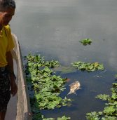 Still in a sorry state, Lake Sebu stinks for days due to fish kill