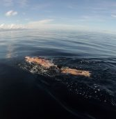 Strong current stops 'Pinoy Aquaman' from crossing Surigao Strait