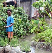 Life in Liguasan Marsh: A garden in a flood zone