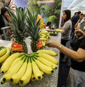 We are not extorted, say banana growers
