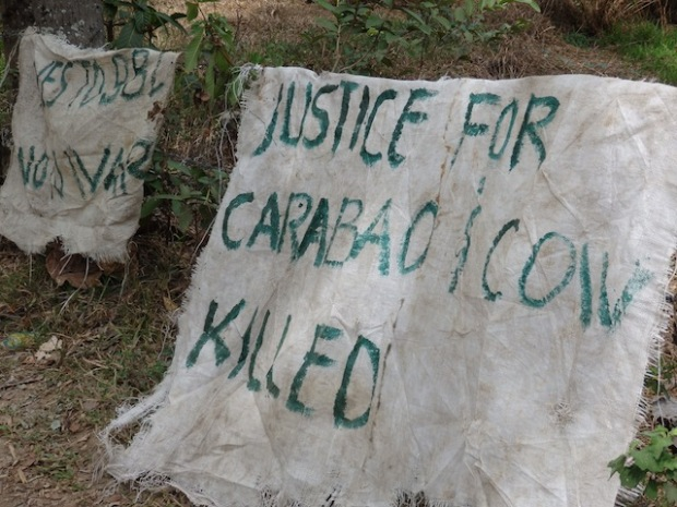 Message along the road to the cornfields. Will residents who lost a carabao and cow be compensated? MindaNews photo by Carolyn O. Arguillas
