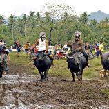 Carabao Race