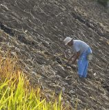 Upland Farmer