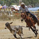 Malaybalay Cowboy