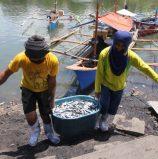 Fish from Samal
