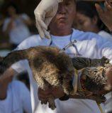 Cat Fury