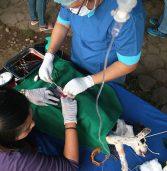 Dog Operation
