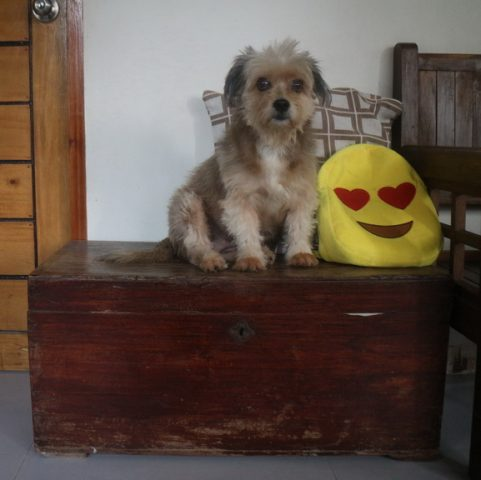 Kimi sits on top of a wooden chest at home. Photo taken on April 11, 2017. KEITH BACONGCO