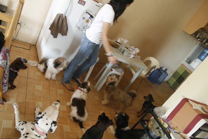 A rare photo of the pack taken at our rented house. (September 11, 2010)